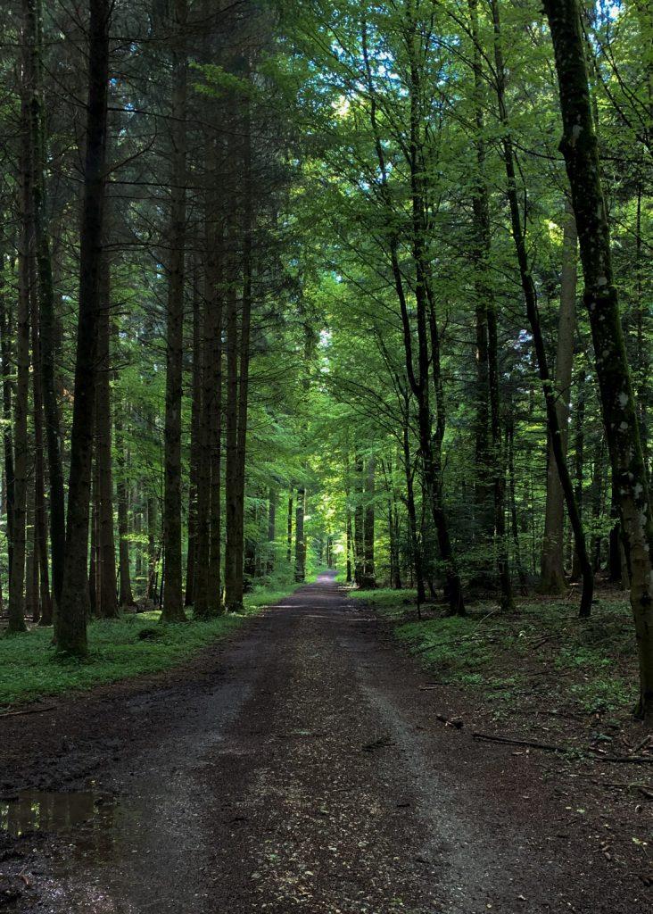Der Wald lichtet